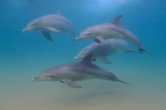 5 mile Dolphins